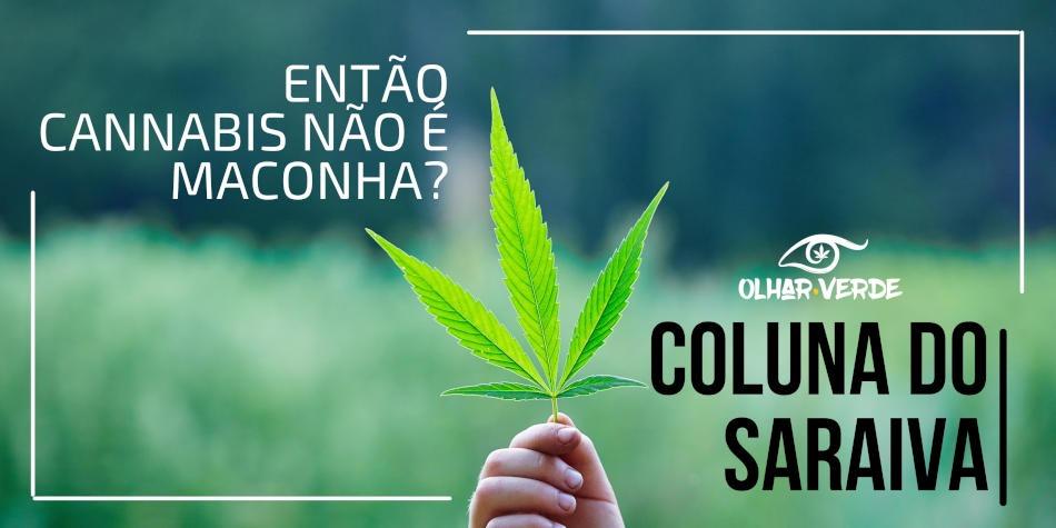 Cannabis e maconha